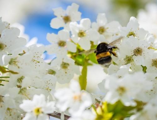 73 av 82 studier viser at mobilstråling har en negativ effekt på insekter