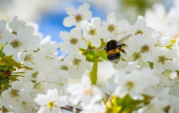 The Insect Inspector – Insekter forsvinner over hele verden